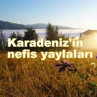 KARADENİZ'İN NEFİS YAYLALARI