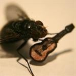 Ahh Diptera, ne güzel şeydin sen öyle!..