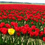 Çiçekler Hakkında Bilinmeyenler
