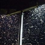 LED Teknolojisi Böcekleri Öldürüyor