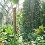 Viyana'da gezilecek müzeler -  Viyana Kelebek Evi
