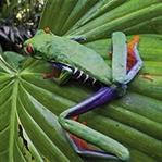 Bir kurbağa biyolojiye bakışımızı nasıl değiştirir
