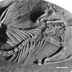 Dinozorları Yok Eden Asteroit Memelileri  de Bitir
