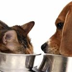 Kedi ve köpeklerde mama kullanımı nasıl olmalı