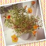Sarı İpek Çiçeğim ve Kadınlar Günü