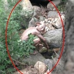 Gollum'a benzeyen canavar bulundu iddiası