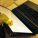 Biri izlerken blog yazmak
