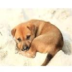 Evcil Hayvanları Öpmek Sağlığa Zararlı mı?