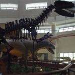 Türkiye' deki Dinozor Müzesi