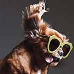 Köpekten Model Olur Mu? Çok Da Güzel Olur