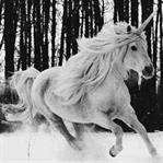 tek boynuzlu atlar, ormanlar, sihirli varlıklar mı