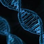 Uzaya Gönderilen DNA Canlı Olarak Geri Döndü
