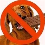 Çikolata Köpekleri Kör Eder Mi?