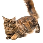 Kedilerin Vücut Dili Bize Neler Anlatır?
