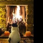 Kedinizi Kışa Nasıl Hazırlarsınız?
