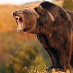 Vahşi Hayvanlara Karşı Alınacak Önlemler