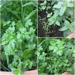 Gıda Terörü - Minik Bahçem
