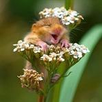 Herkes Güler Ama Hayvanlar Bir Başka Gülüyor !