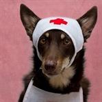 Köpekler Zehirlendiğinde Ne Yapılmalı?