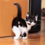 Yavru Kedinin Cinsiyeti Nasıl Anlaşılır?
