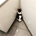 Kamuflaj Uzmanı Kediler