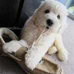Yalnız Köpeğin Her Yaramazlığı Yalnızlık Endişesi