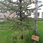 Orman Haftası ve Ağaç Bayramı
