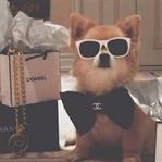 Şimdi de Instagram'ın zengin köpekleri