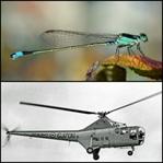 Doğa Harikası Bir Böcek: Yusufçuk