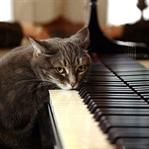 Klasik Müzik Seven Kedilere Kulak Verin…