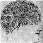 İnsan Beyninin Ana Hatları