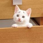 8 Haftalık Kedi, Hayatı Boyunca Endişeli Gözükecek