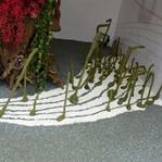 Çiçeklerden Esinlenerek Bestelenmiş 16 Eser