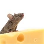 İlk Kitaplığım: Peynirli Börek