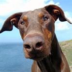 Söz Dinlemeyen Köpeğin Manifestosu