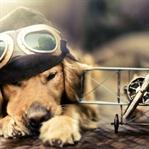 Evcil Hayvanlarınızla Yolculuk