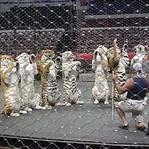 Sirk Hayvanları Gerçeği