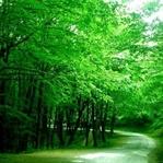 Ağaçlarımızın Önemi