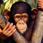 Primatlar, Taş Devri'ne girdi