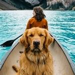 Bir Köpekle Seyahat