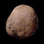 Dünyanın En Pahalı Patatesi