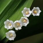 Zehirli Ev Çiçekleri Hangileridir?
