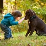 Evcil Hayvan Beslemek Çocuk Sağlığına İyi Geliyor