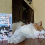 Giden Bir Kedinin Ardından - Ferit Edgü