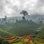 Nuwara Eliya, Sri Lanka ve Çayın Başkenti
