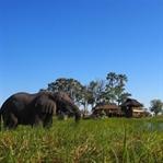 Okavango Delta – Schlafen neben Elefanten