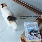 Okuma Halleri- Giden Bir Kedinin Ardından