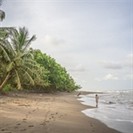 Top Highlight in Costa Rica - Der Tortuguero NP