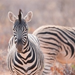 Wildlife-Fotografie in Namibia