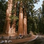 Sequoia NP California – Nützliche Tipps und Infos